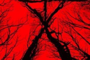 Blair Witch film: B-Roll footage in inglese dell'horror sequel di The Blair Witch Project