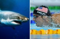 Shark Week su Discovery Channel: 2 documentari in Prima TV con Michael Phelps