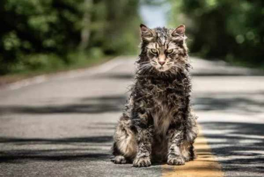 I morti tornano in vita nel trailer italiano di Pet Sematary
