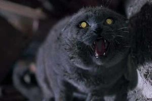 30°anniversario Pet Sematary - Cimitero vivente in home video ad aprile